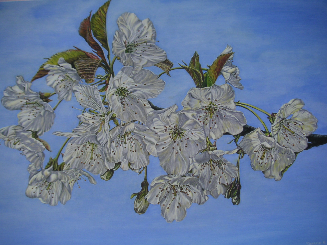 quadri primo album cliccare sopra dipinti serafin